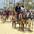 In carriage horses - 图库照片