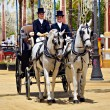 In carriage horses - Stock Photo