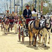 Bij vervoer paarden — Stockfoto
