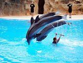 イルカと遊ぶ — ストック写真