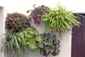 Wall with plants — Stock Photo