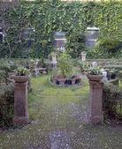 Garden pot plants — Stock Photo