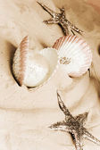 Shells And Starfishes — Stock Photo