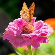 Постер, плакат: Butterfly On A Flower With clipping path