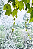 Foliage on a Waterfall — Stock Photo