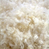 Raw Wool — Stock Photo