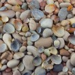Sea pebbles and shells background — Stock Photo #9445962