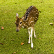 Deer on the grass - Stockfoto