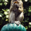A monkey with ice-cream — Stock Photo