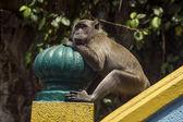 A monkey sittin on handrails — Stock Photo