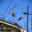 Stock Photo: Sparrows in city on branches