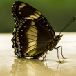 Butterfly — Stock Photo #9635289