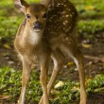 Little deer — Stock Photo #9739048