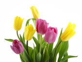 Yellow and pink tulips isolated on white — Stock Photo