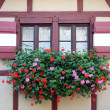 Stock Photo: Window with flower in Nuremberg