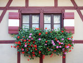 Window with flower in Nuremberg — Stock Photo