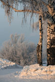 Winter landscape with birch trees and snow drifts — Stock Photo