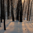 Beautiful winter sunset with trees in the snow — Stock Photo