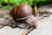 Snail on the road — Stock Photo