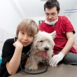 Little boy holding his Westie at the veterinarian — 图库照片