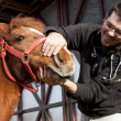 Vet examining horse — Stock Photo