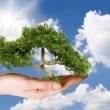 Hand holding tree — Stock Photo #8828993