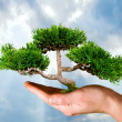 Hand holding tree — Stock Photo #8828999