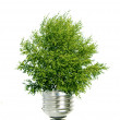 Tree in light bulb symbolizing green energy - Stock Photo