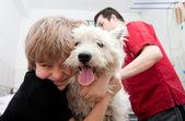 Little boy holding his Westie at the veterinarian — Zdjęcie stockowe