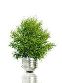 Tree in light bulb symbolizing green energy — Stock Photo