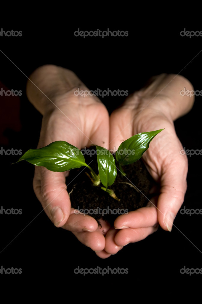 Plant in hands — Stock Photo #8827240