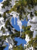 Icy decoration — Stock Photo