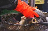 Fisherman hands — Stock Photo