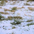 Snow covered grass — Stock Photo