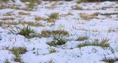 Snow covered grass — Stockfoto