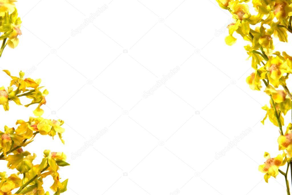 Telaio orchidea gialla foto stock roan74 8700523 for Orchidea foglie gialle