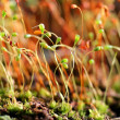 Moss closeup — Stock Photo
