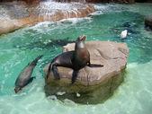 Happy Seals — Stock Photo