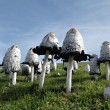 Stock Photo: Mushroom forest