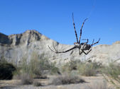 Spider on deserts — Stock Photo