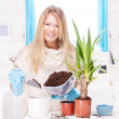 Stock Photo: Womtransplant plant in bigger pot