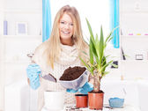 Woman transplant plant in a bigger pot — Stock Photo
