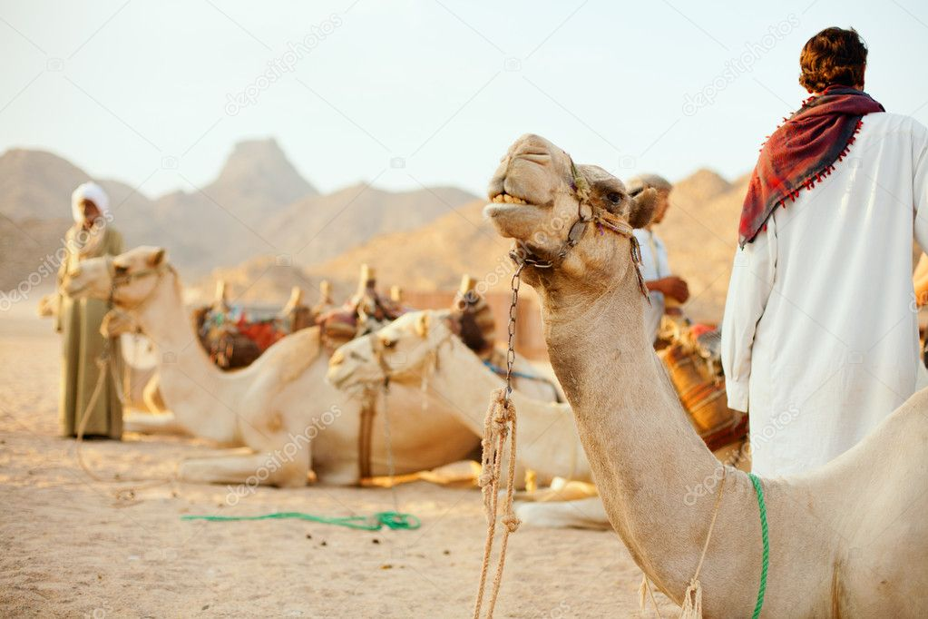 Bedouins and their camels in desert  Stock Photo #8653981