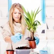 Woman transplant plant in a bigger pot - Stock Photo