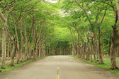 Tunnel tree — Stock Photo