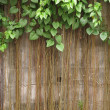 Old brick wall with the tree — Stock Photo