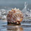 Shell in the waves — Stock Photo