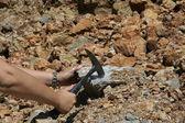 Hand, hammer and stone — Stock Photo