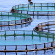 Fish farm - Stock Photo