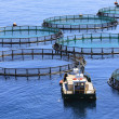 Stock Photo: Fish farm